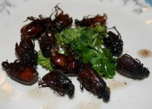 Cảnh báo nguy cơ ngộ độc do sử dụng côn trùng làm thức ăn