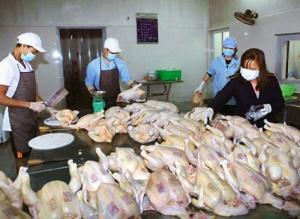 Kiểm soát an toàn thực phẩm từ gốc: Cần giải pháp mạnh, chuyên nghiệp hóa