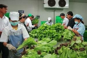 Hà Nội đã có 65 chuỗi liên kết nông nghiệp an toàn