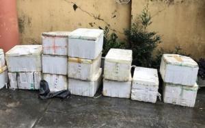 Hơn 1 tấn cá ong không rõ nguồn gốc bị tiêu hủy