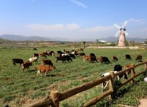 Lâm Đồng: Khánh thành trang trại bò sữa Organic tiêu chuẩn châu Âu đầu tiên tại Việt Nam