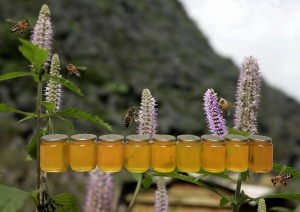 Nghiên cứu phân tích bổ sung chỉ tiêu chất lượng sản phẩm  chỉ dẫn địa lý cho mật ong bạc hà Cao nguyên đá Đồng Văn, Hà Giang