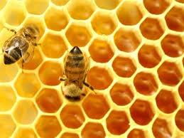 Dự án sản xuất và tiêu thụ một số sản phẩm (BeePs) từ ong mật Apis mellifera