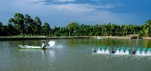 Dự án Nghiên cứu triển khai xây dựng mô hình áp dụng Quy phạm thực hành sản xuất nông nghiệp tốt VietGAP đối với thủy sản nuôi.