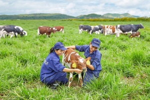 Tìm hiểu về trang trại bò sữa organic tiêu chuẩn châu Âu của Vinamilk