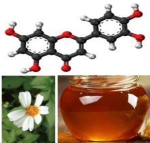 Xác định thành phần và hàm lượng LUTEOLIN trong mật ong và phấn hoa càng cua, BIDENS PILOSA L.(Asterales: Asteraceae)